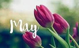 may massage studio flowers