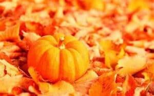 pumpkin on leaves